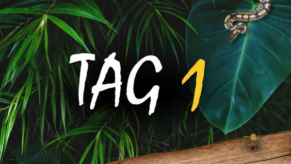 Dschungelcamp 2019 Ganze Folgen 62