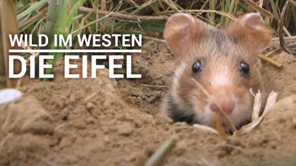 Wild im Westen - Die Eifel