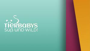 Thema heute u.a.: Tigerbabys