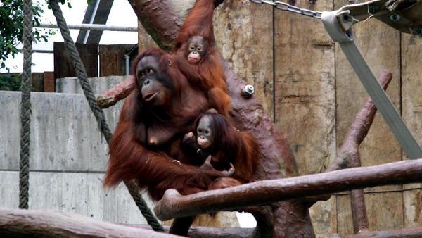 Abschied vom Affenbaby