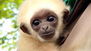 Thema heute u.a.: Affeneltern gesucht