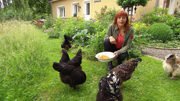 Thema heute u.a.: Private Hühnerhaltung