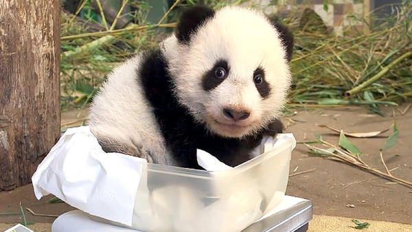 Thema heute u.a.: Das doppelte Pandabärchen