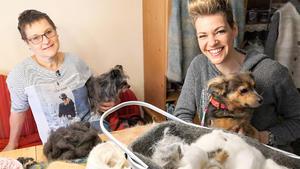 Thema heute u.a.: Stricken mit Hundewolle