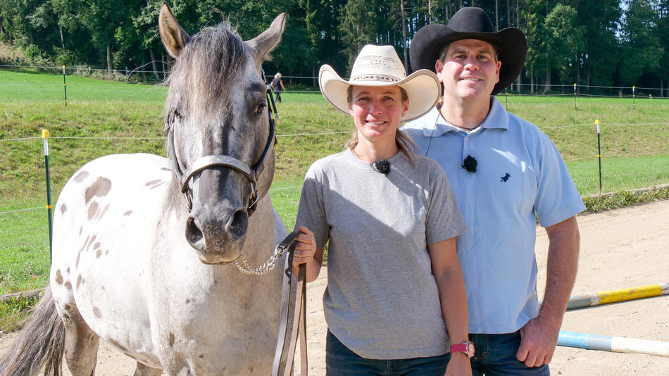 Die Pferdeprofis Online Stream