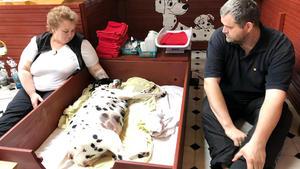 Heute u.a.: Dalmatinergeburt mit Hindernissen