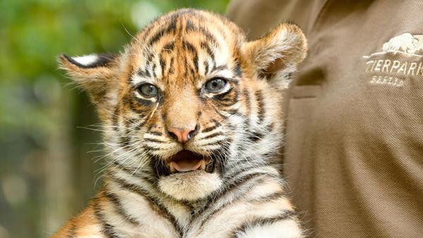 Tierbabys Süß Und Wild