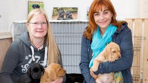 Heute u.a.: Rasseportrait Labrador Retriever