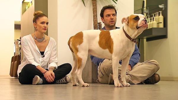 "Westhighland-Terrier ""Sam"" / Bulldogge ""Fine"""