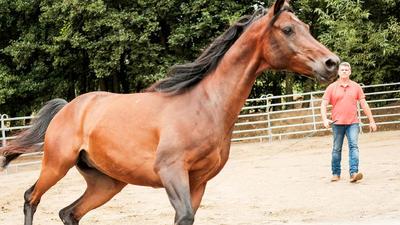 Tv Now Die Pferdeprofis