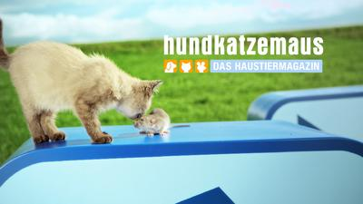 Tv Now Hundkatzemaus