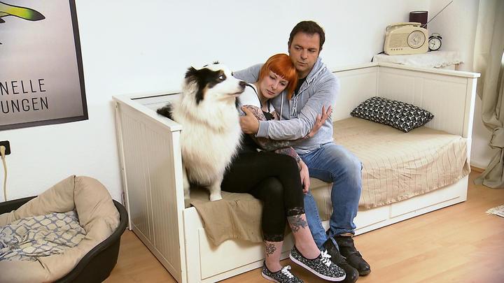 Tv Now Hundeprofi